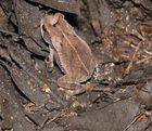 Tierwelt Yucatan 7