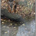 Tiger-2. (reload)