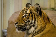 Tiger 2.0