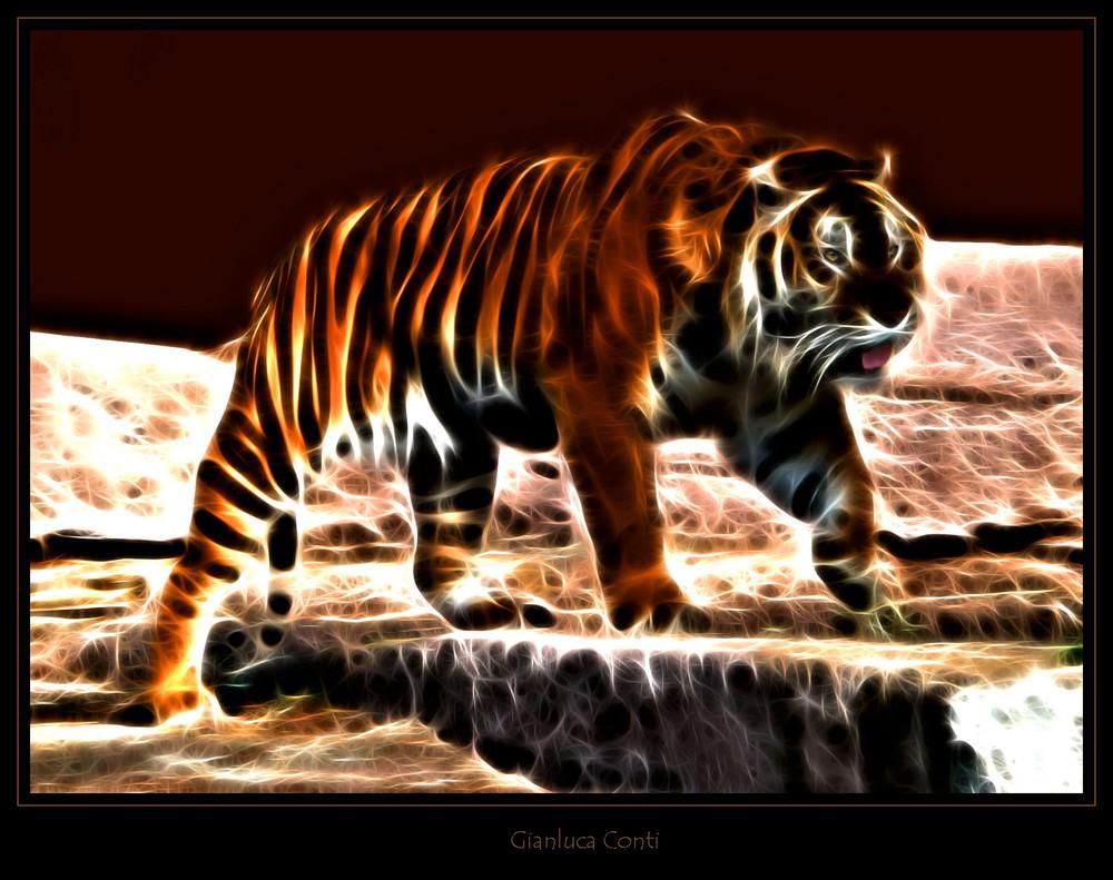 Tiger effect