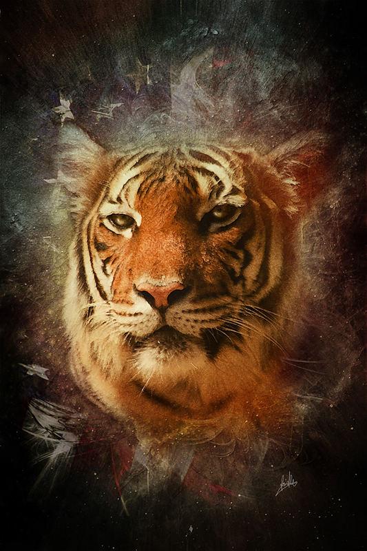 Coole Tiger Bilder