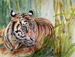 Tiger im Bambus - 30 x 40 cm (2011)