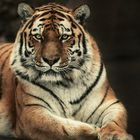 Tiger-Lady in Pose