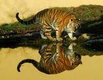Tiger mal 2