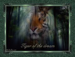 Tiger of the dream