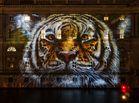 Tiger Portrait am neuen Marstall