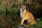 Tiger reloaded