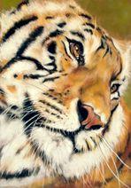 Tiger... schöne Bestie