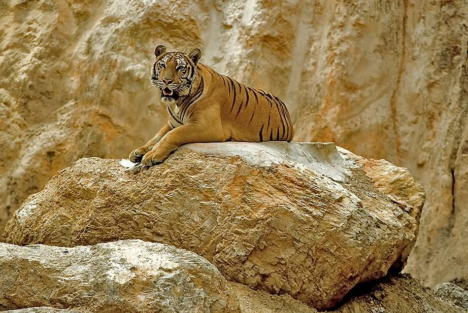 Tiger-Tempel 02v.5