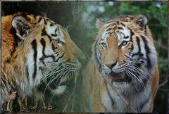 Tigerkater Elroy in seiner.......................