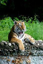 Tigerkind Elena