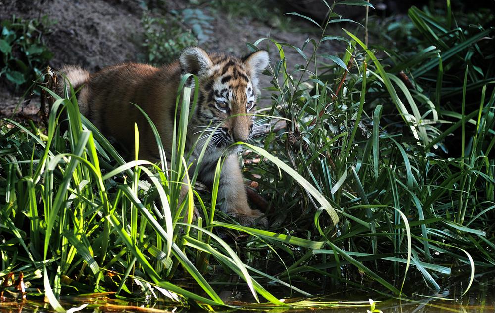 Tigerprinzessin auf Entdeckungstour