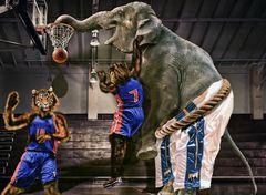 Tigers vs Elephant