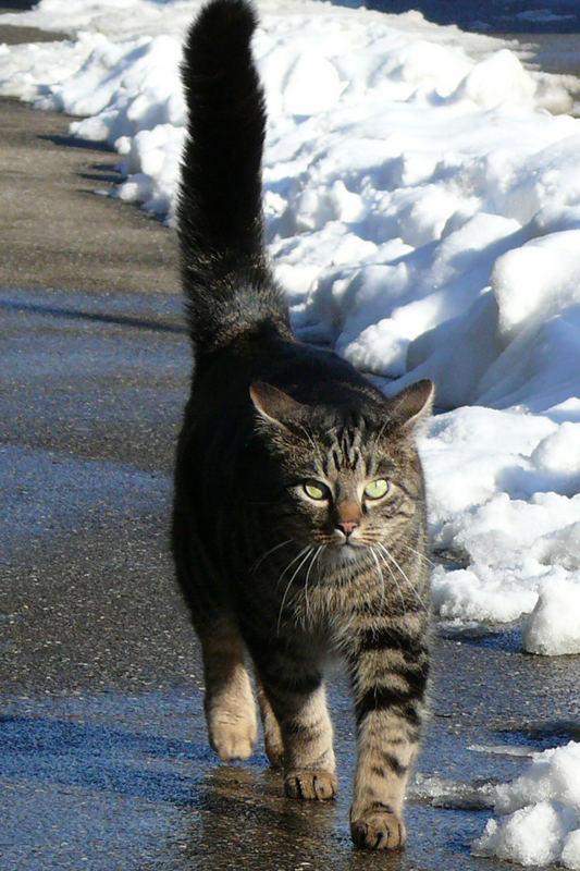 Tigris will mit uns spazieren gehen
