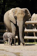 Tika mit ihrer Mutter - geb.13.07.2007 Zoo Wuppertal