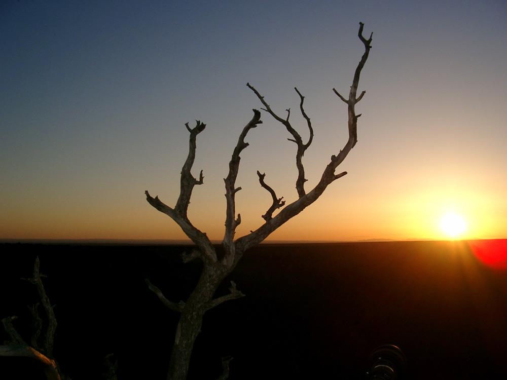 ...till dawn