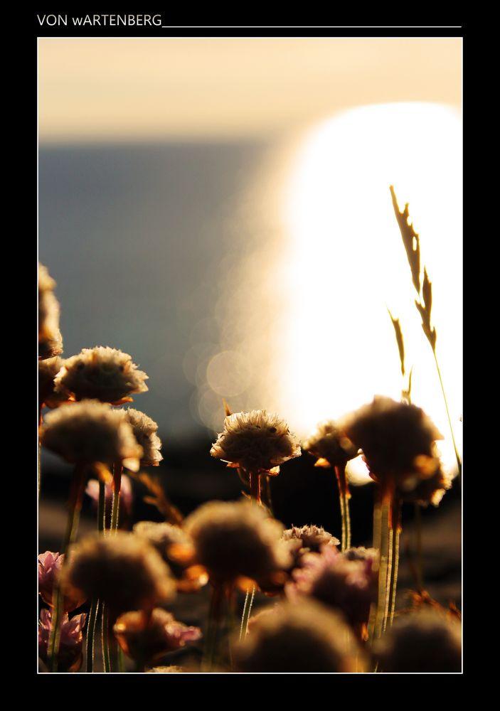 *time-blossom* I