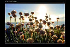 *time-blossom* II