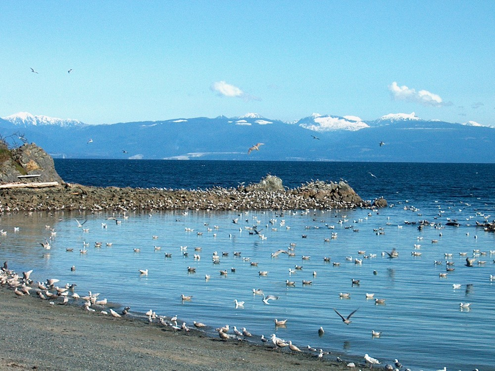 Time to fly at Pipers Lagoon Vancouver Island