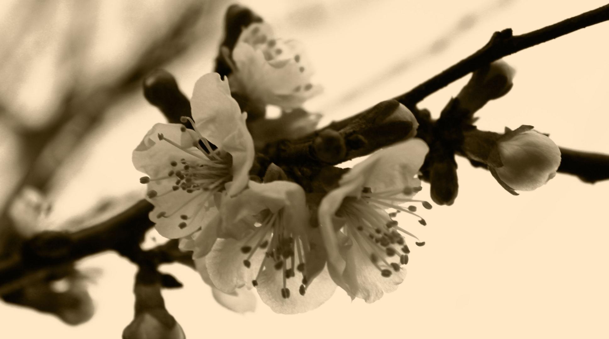 timida primavera