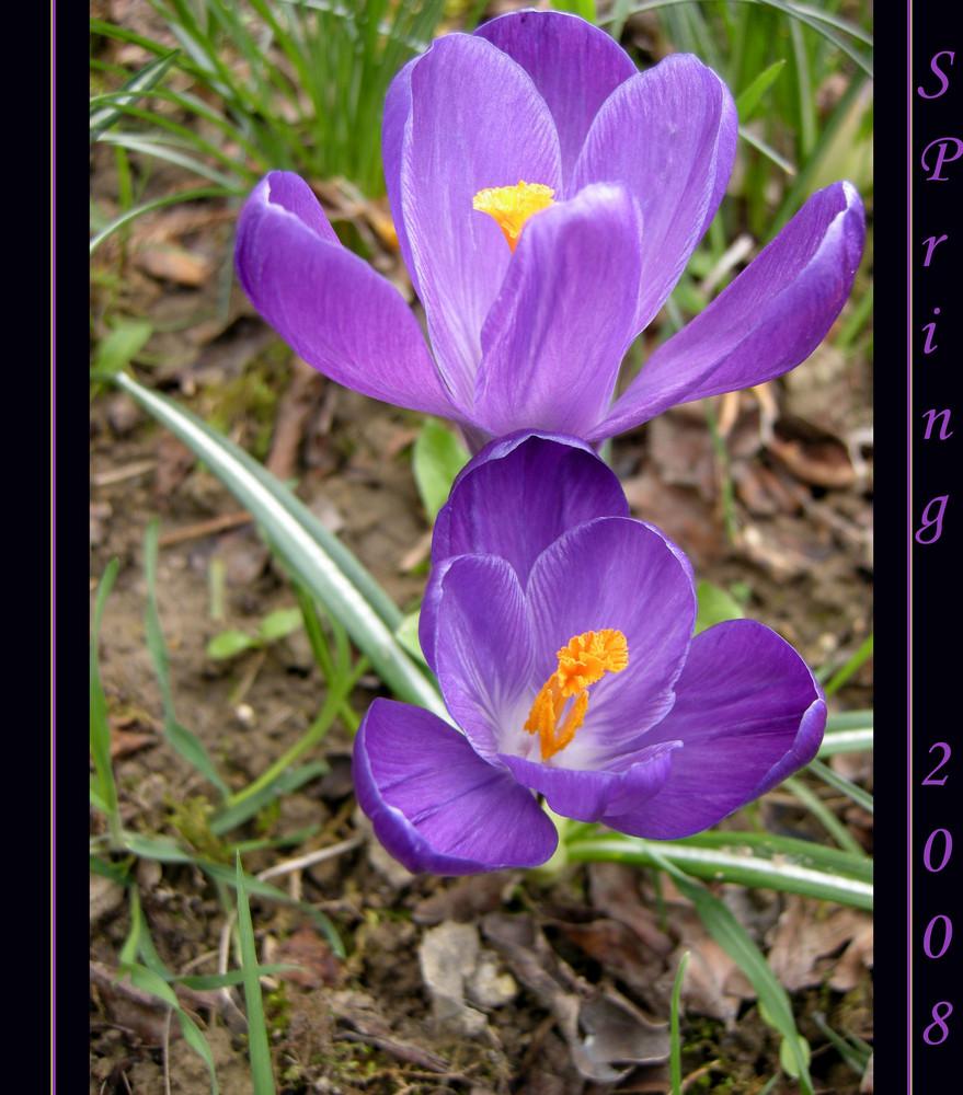 timidamente primavera
