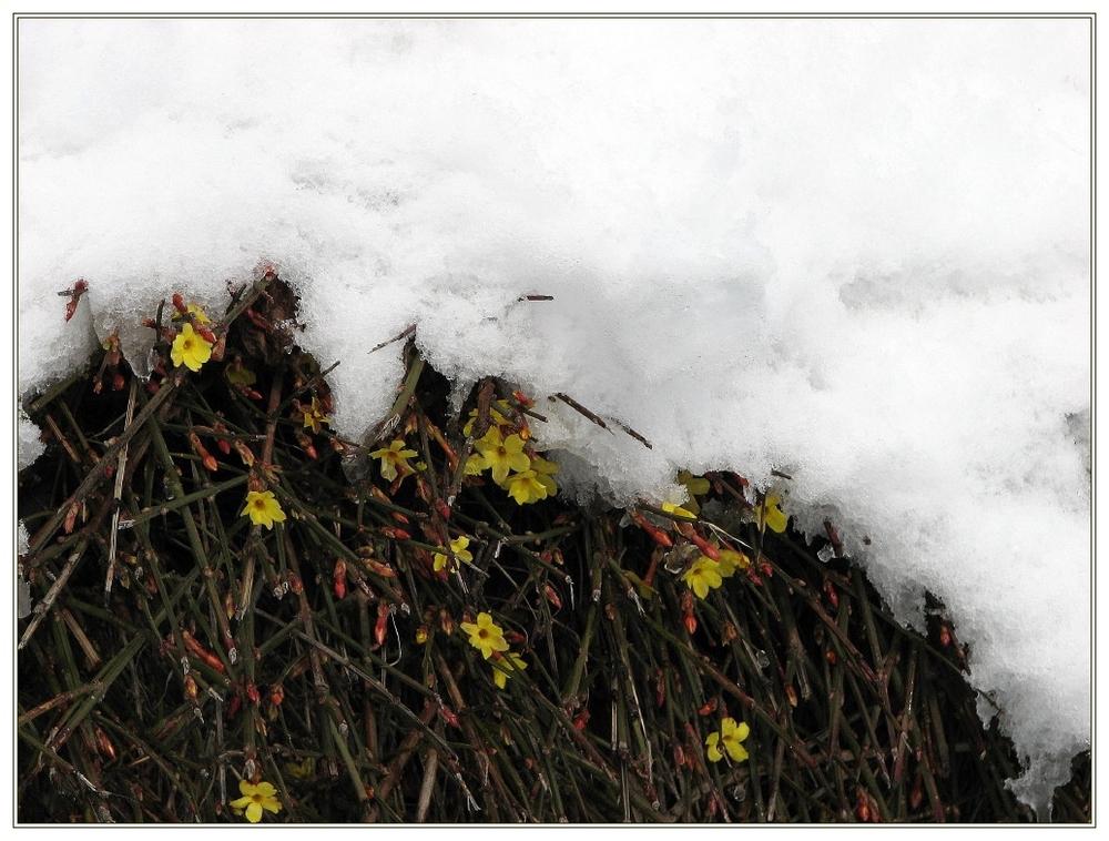 Timidi i primi fiori della primavera...