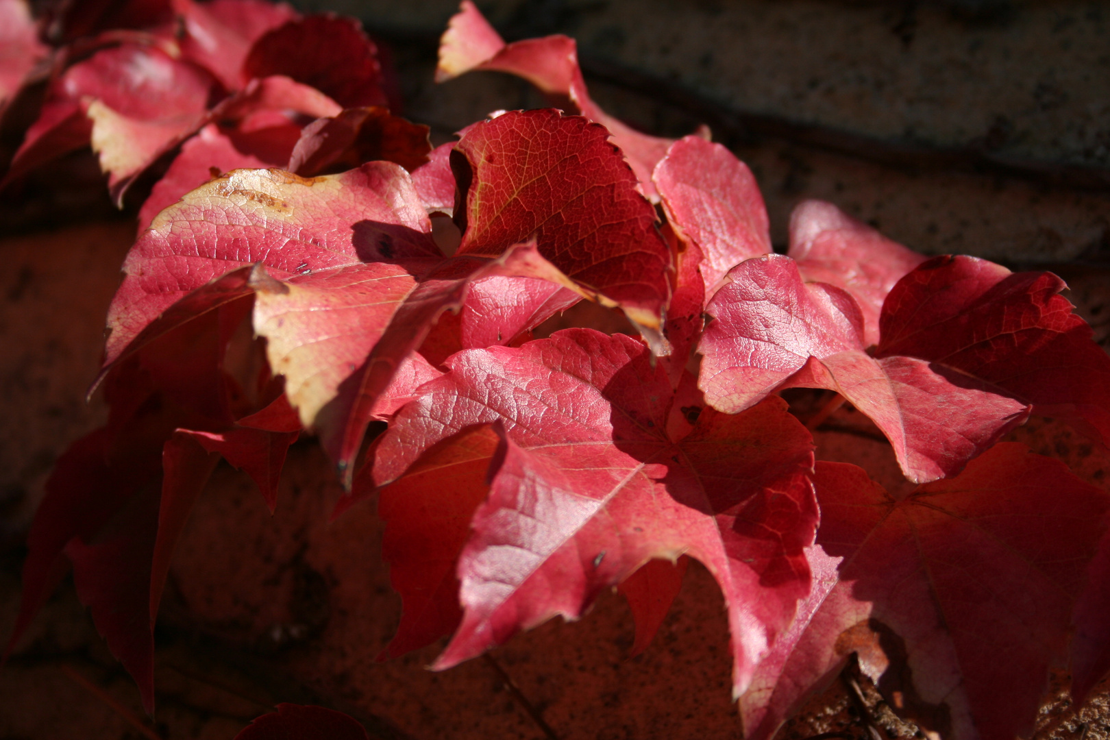 timido autunno