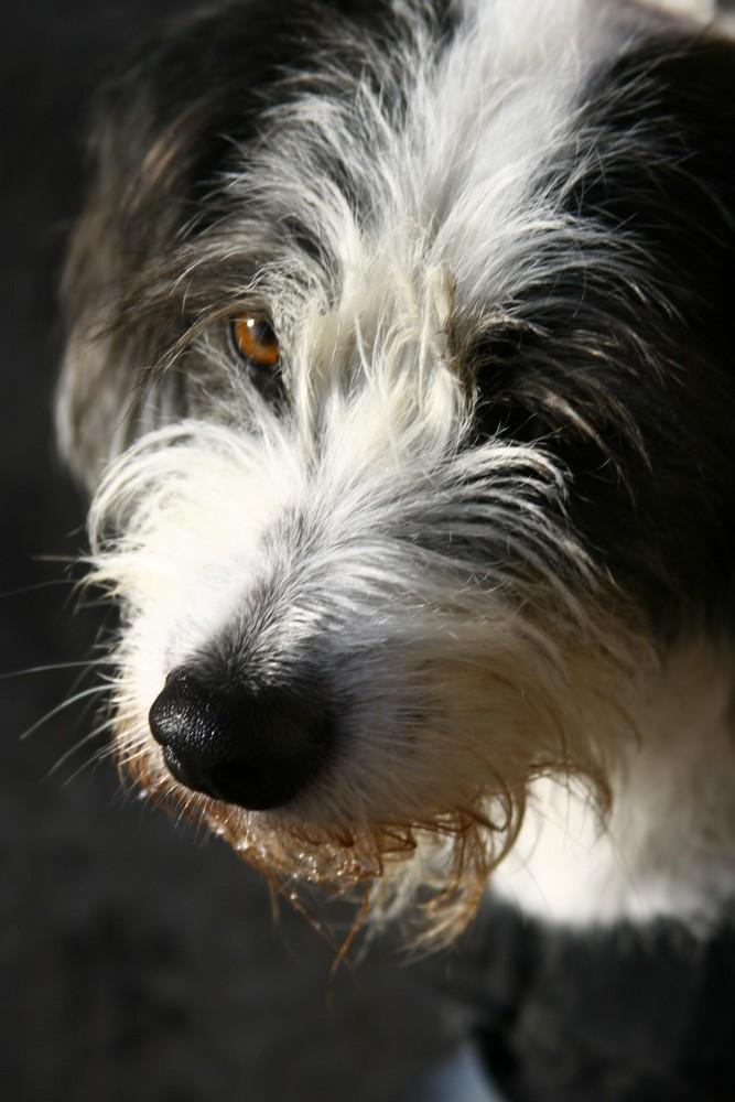 Timmy - good dog