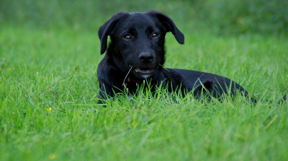 Timon im Grass