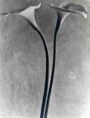 Tina Modotti, Alcatraces (Calle), 1927