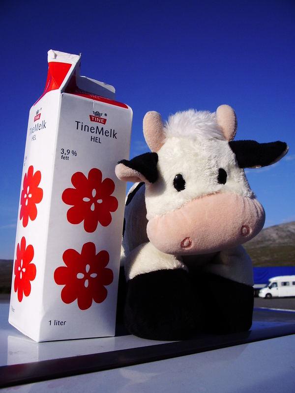 Tine Milkmodell Mooty