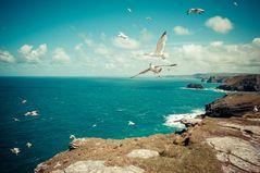 Tintagel Seagull