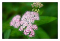 Tiny Flowers-2