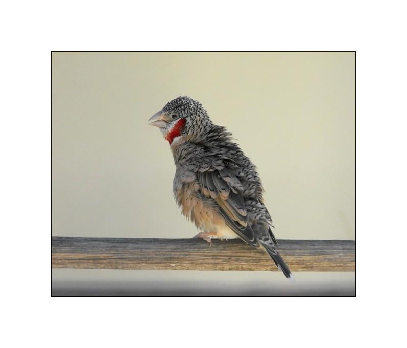 ... Tiny ruffled feathers ...