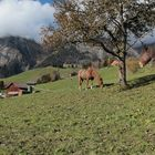 Tiny Suisse World