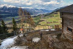 Tirol 1