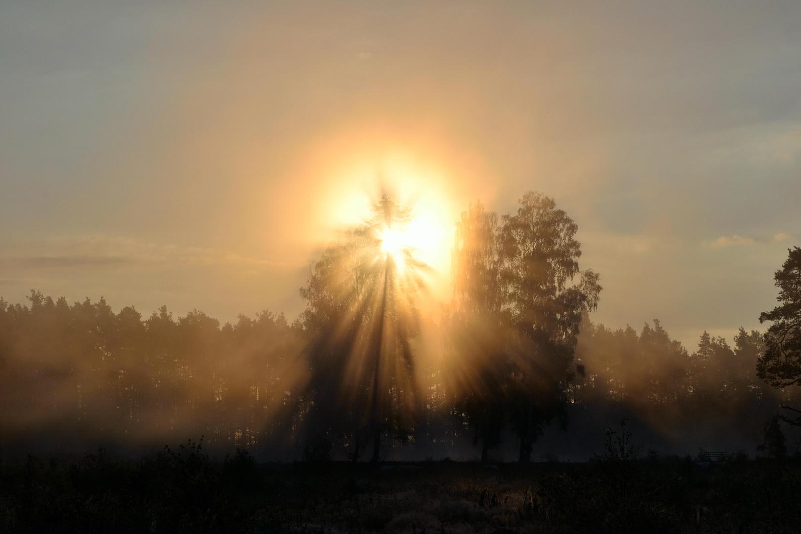 Tirschenreuth - Sonnenaufgang im Moor - September 2012