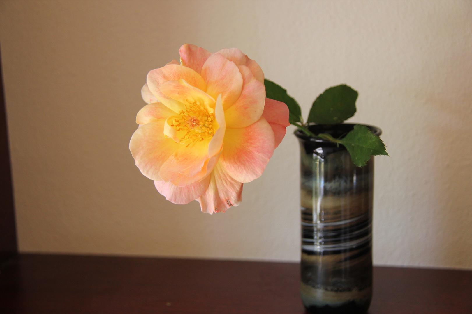 Tis the last Rose of Summer....