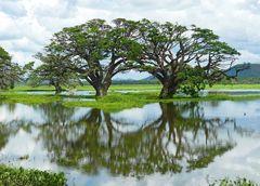 Tissamaharama Lagoon