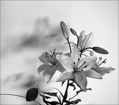 Titelbild Fotohome-Ordner