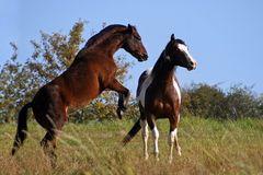 Tizian und Wyoming