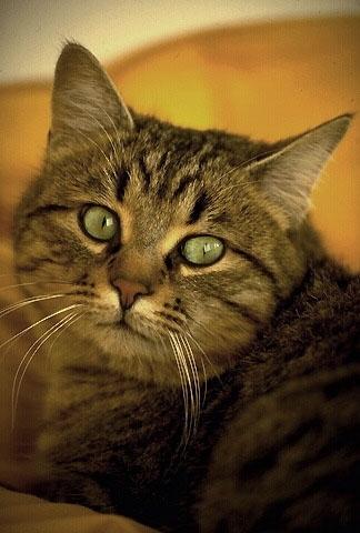 """""""Tizio"""" il gatto"""