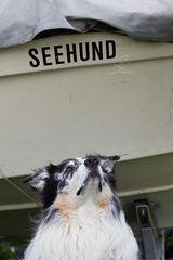 T.MM-Seehund