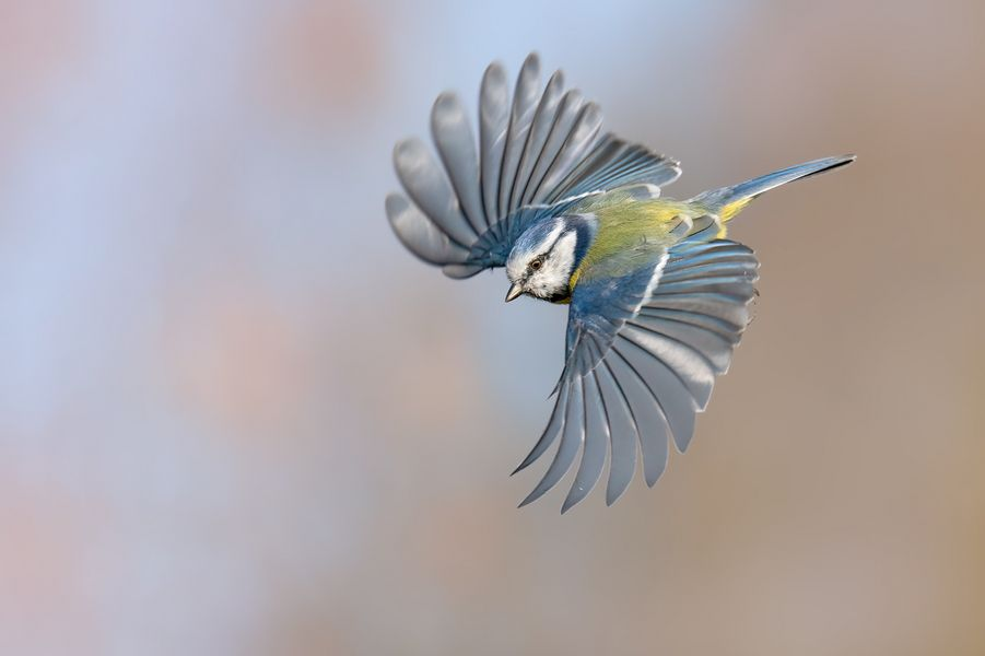 ~to fly~