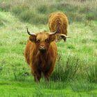 ... to pasture