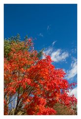 To seek the color of fall 2013-2