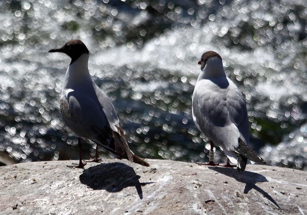 To sunny birds;-)