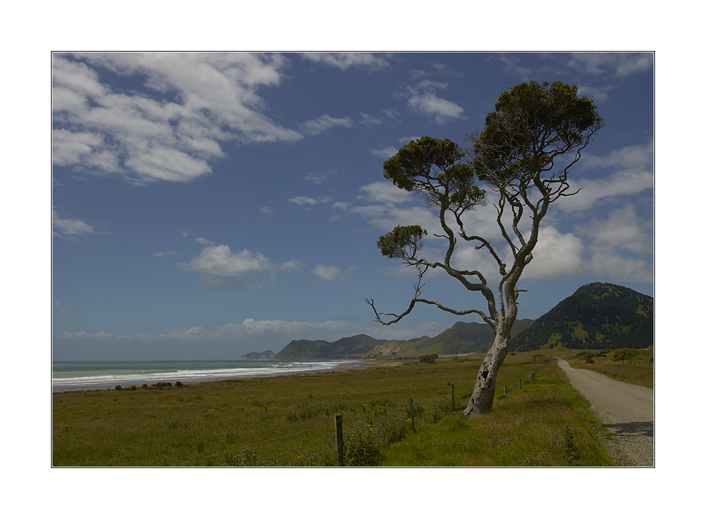 [ to the east cape ]