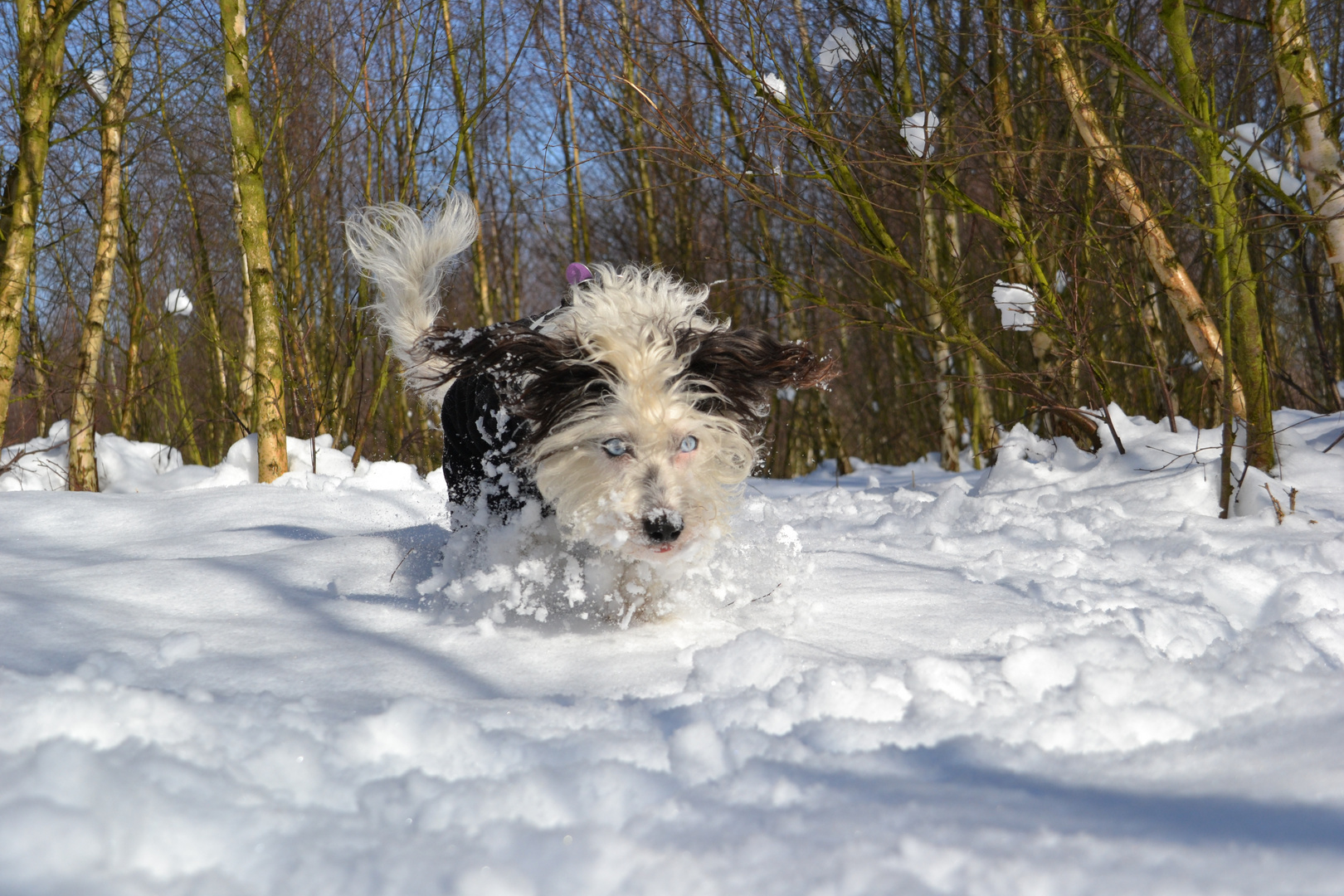 toben im schnee 2