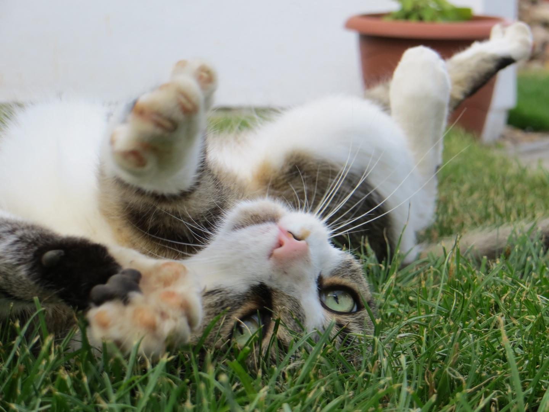Toby im Gras